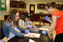 East Rockaway Students Dissect Fetal Pigs Photo